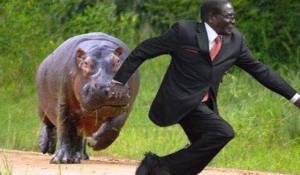 mugabe rhino