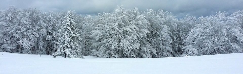cropped-snow-forest.jpg